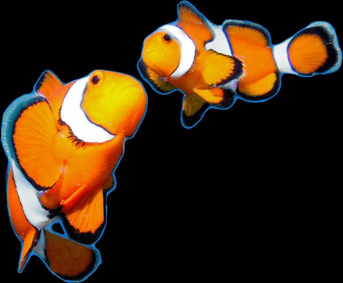 Wavelength Recruitment Fish