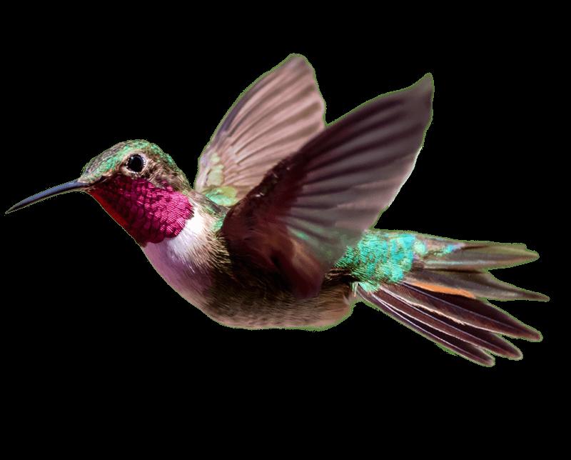 Wavelength Hummingbird