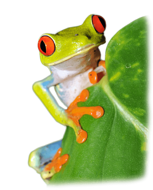 Wavelength Recruitment Frog