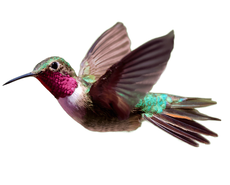 Wavelength Hummingbird